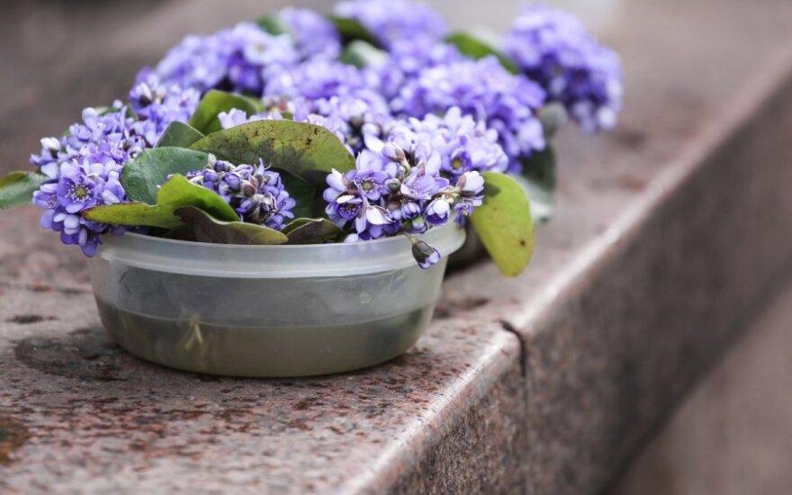 Augalai – keršytojai, svaigintojai ir žudikai