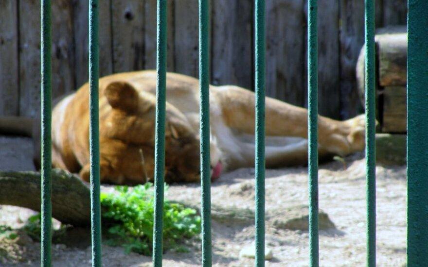 Asociatyvi nuotr. / Konfiskuoti gyvūnai atsidurtų zoologijos sode