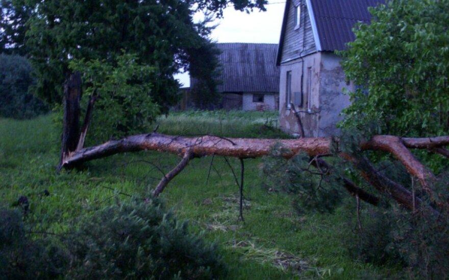 Žaibo nutrenktas medis