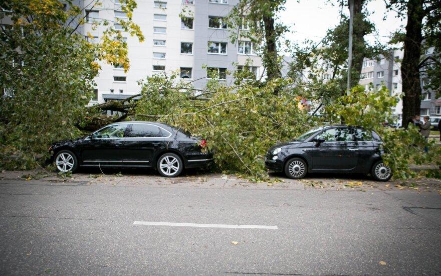 Vilniuje ant automobilių nuvirto vėjo nulaužtas medis