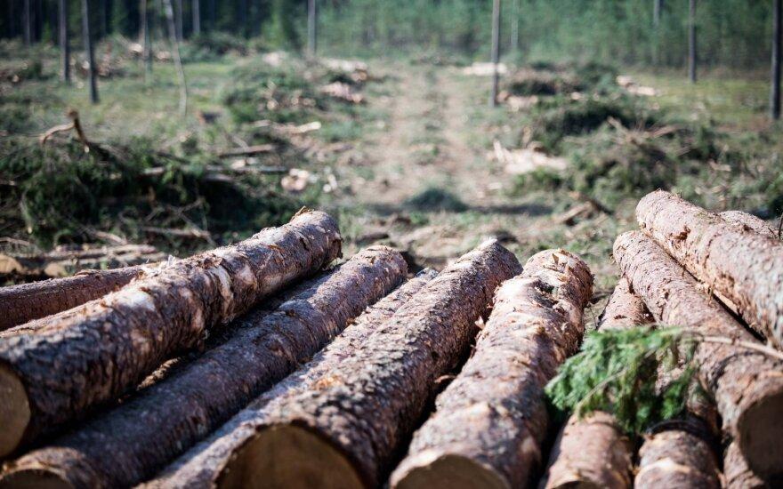 Vyriausybė pritarė miškų kirtimų ribojimui saugomose teritorijose