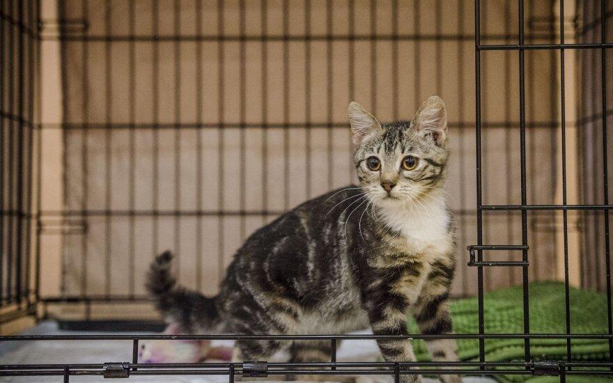 Išgyvenimo kovą laimėjusi katytė Liuka ieško šeimininkų!