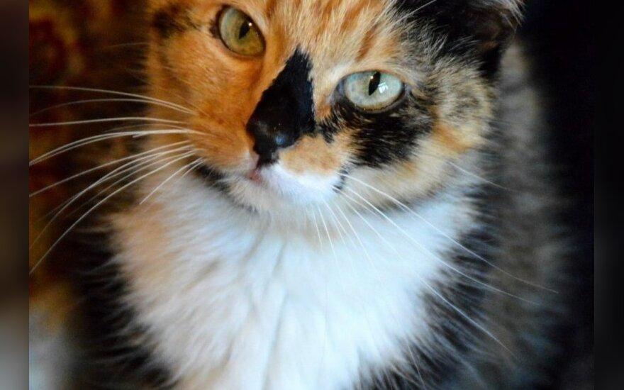 Katino svajonės: katinėliai ieško namų