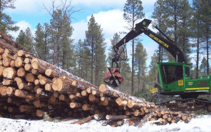 Trobelės statyba miške