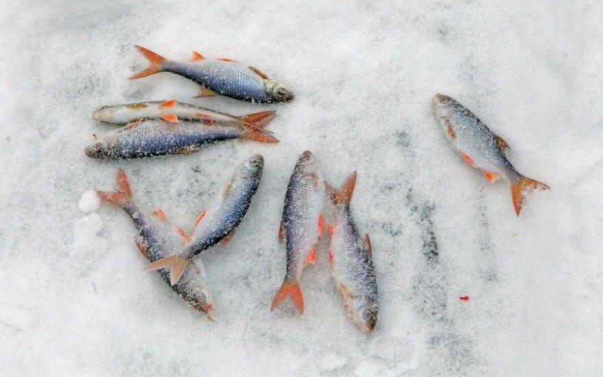Žvejai mėgėjai pasiryžę akylai kontroliuoti Aplinkos ministerijos skirstomas lėšas