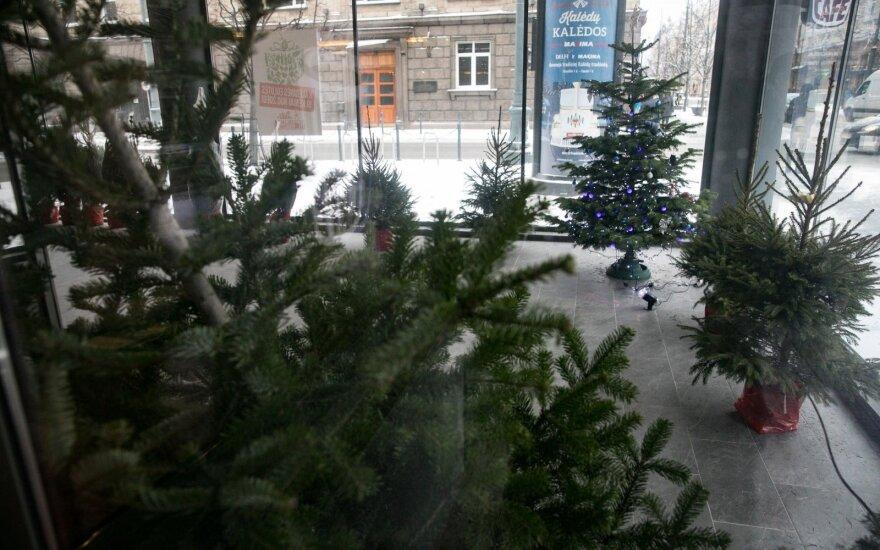 Visa tiesa apie kalėdines eglutes: neigiamas plastikinio medelio poveikis išlieka šimtus metų, o gyvos sukuriamas deguonis džiugina kasdien