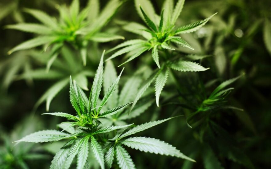 Lithuania legalizes medicines containing cannabis