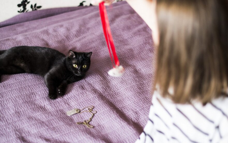 Priglausta katė tapo tikru namų instruktoriumi