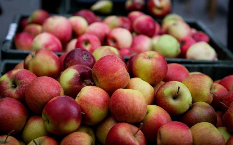 Lenkai obuolius siūlyte siūlo amerikiečiams