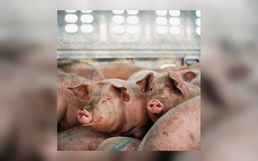 Kiaulių augintojai purtosi biodujų jėgainių prievolės
