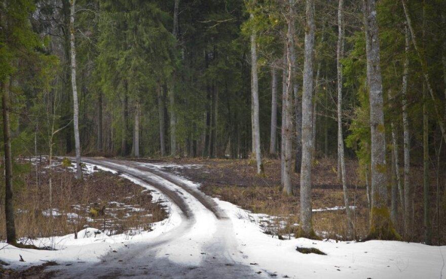Šalies miškuose - pavasario polaidis: važinėti jų keliais sunkiasvorėmis mašinomis draudžiama / J. Danausko nuotr.