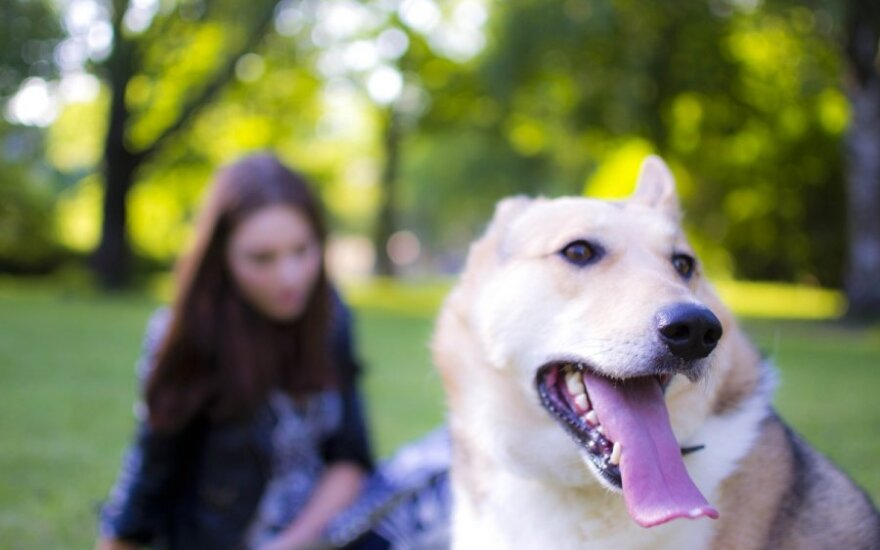 Kaip šuo be uodegos užpildė namų tuštumą