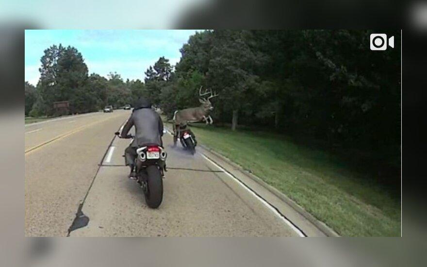 Elnio šuolis per motociklininkus