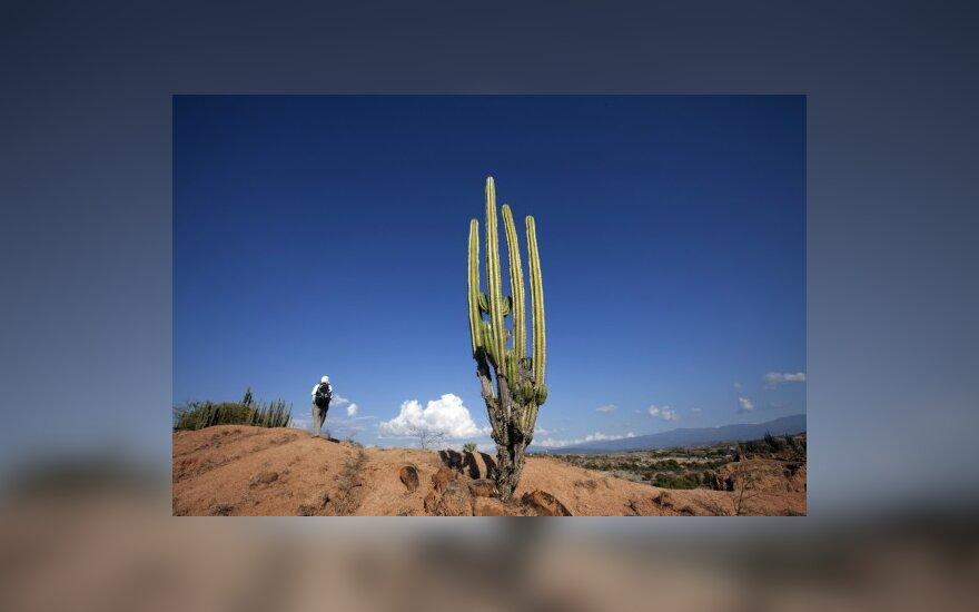 Turistas keliauja po El Cuzco regioną Tatacoa dykumoje (Kolumbija)