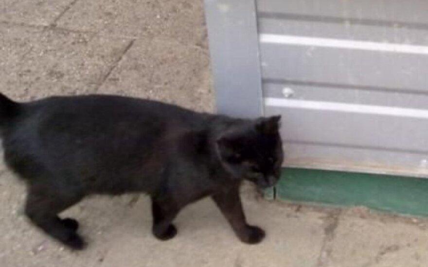 Į gatvę išmestai katytei reikalinga pagalba
