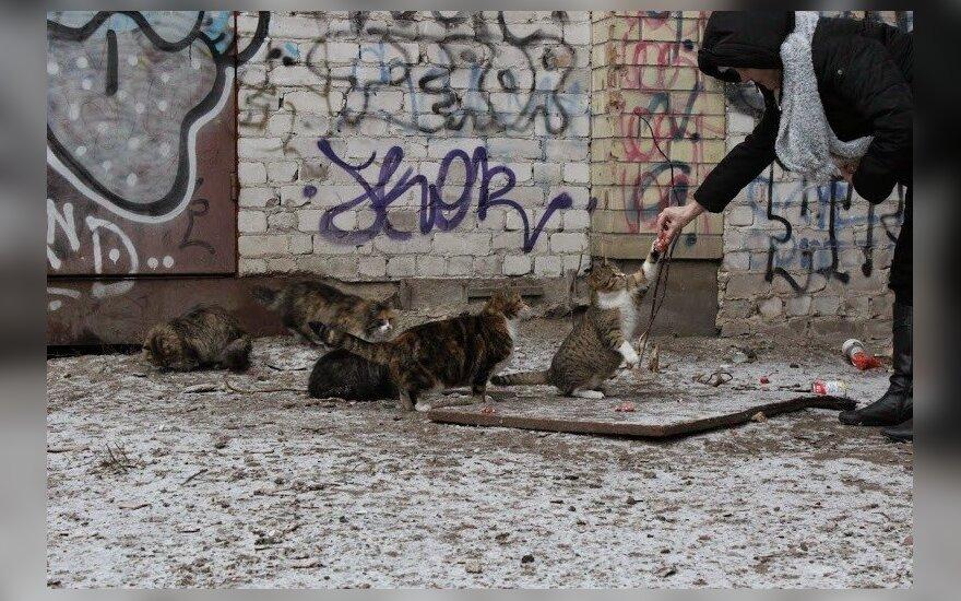 Neprijaukinamos katės