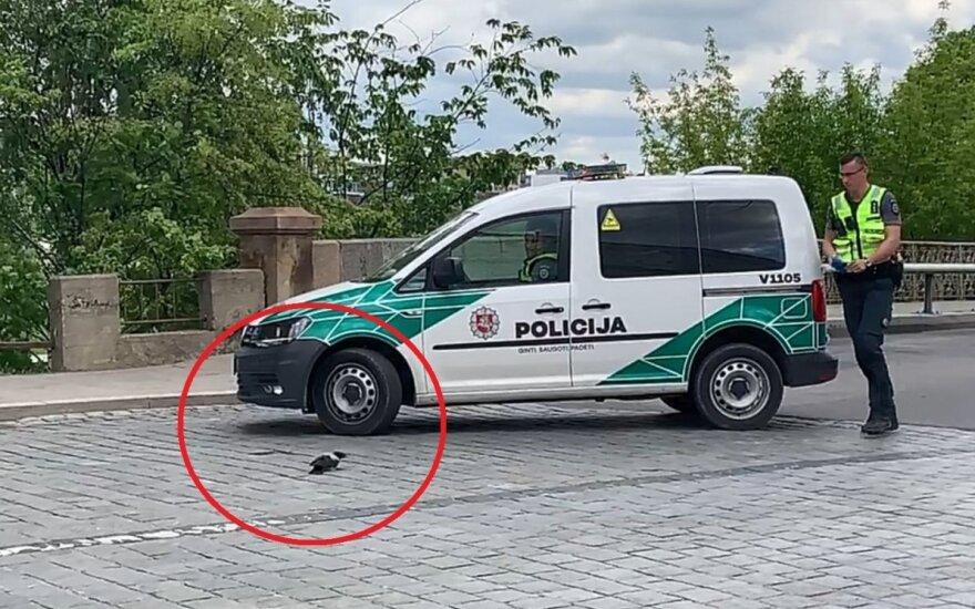 Įamžino gražų poelgį: judrioje gatvėje policininkai stojo gelbėti nusilpusios varnos