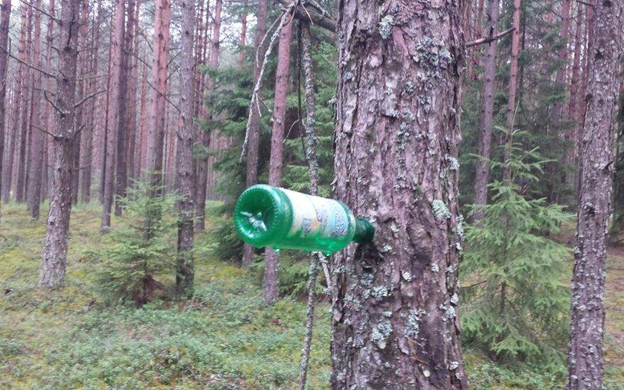 Miške ieškojo grybų sriubai – rado visai ką kita