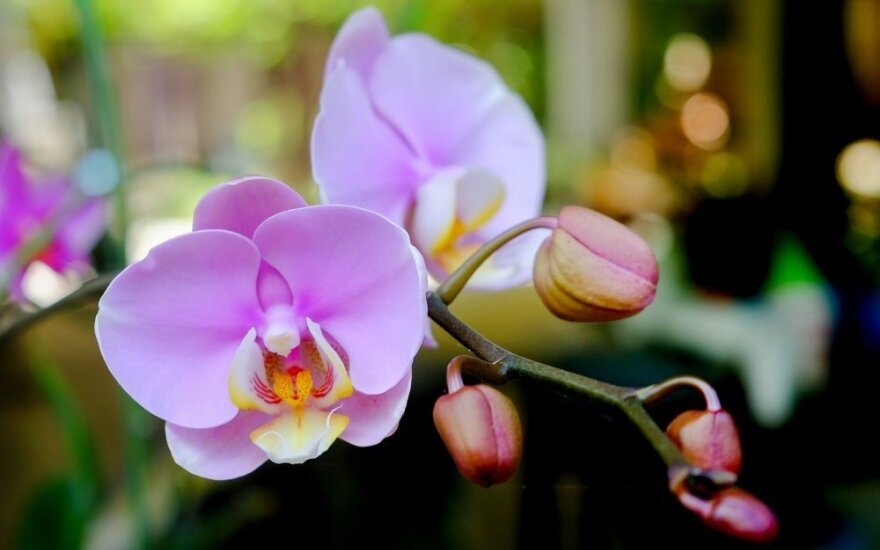 Gėles auginanti tinklaraštininkė: tik neparsineškite namo sergančių augalų ir kenkėjų