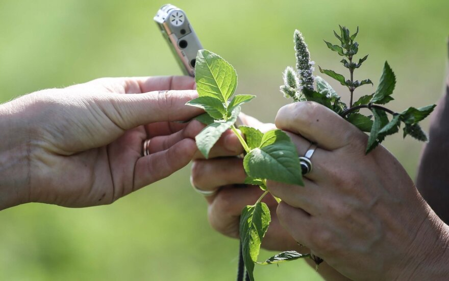 Aromatinių žolynų ekologinis ūkis. Paliūniškis