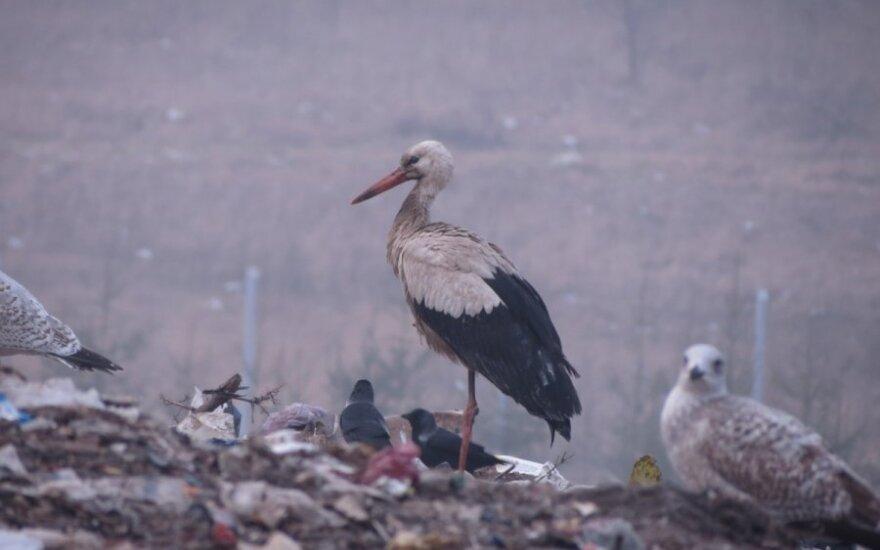 Dumpiai wasteland