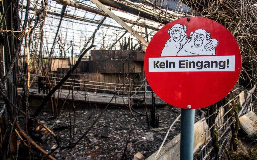 Vokietijoje per gaisrą zoologijos sode žuvo dešimtys beždžionių