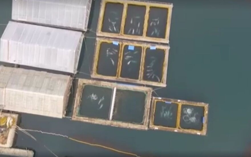 """Rusija paleido """"banginių kalėjime"""" laikytų gyvūnų pirmąją grupę"""
