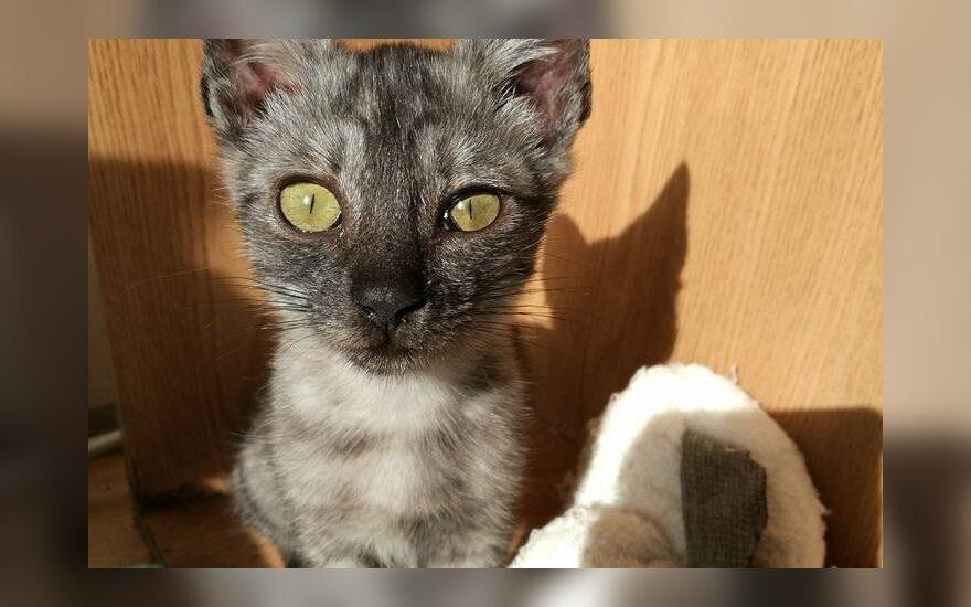 Širvintose rastas katinėlis buvo pasmerktas mirti – ieškomi šeimininkai
