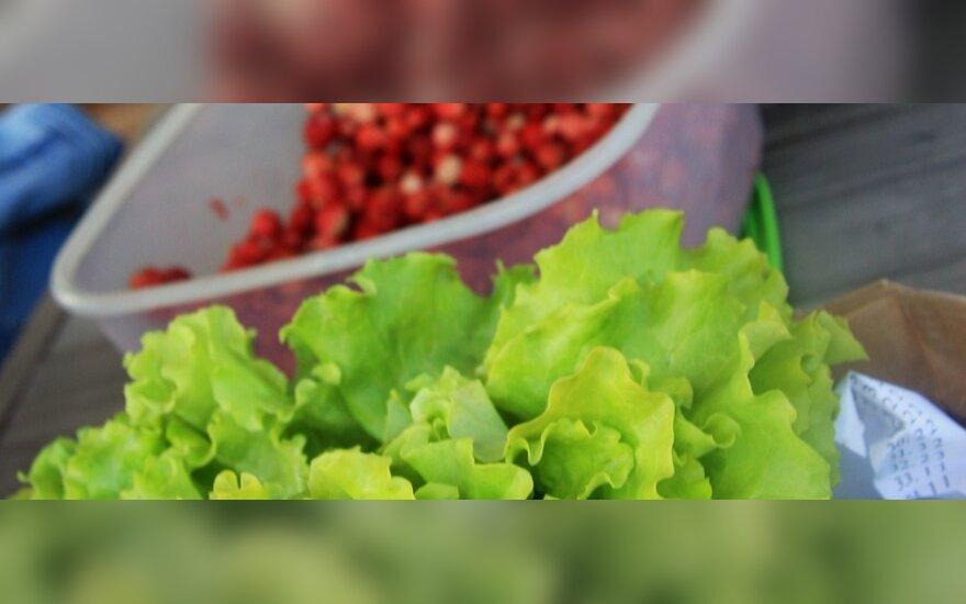 Ar lietuviška alga suderinama su ekologišku maistu?