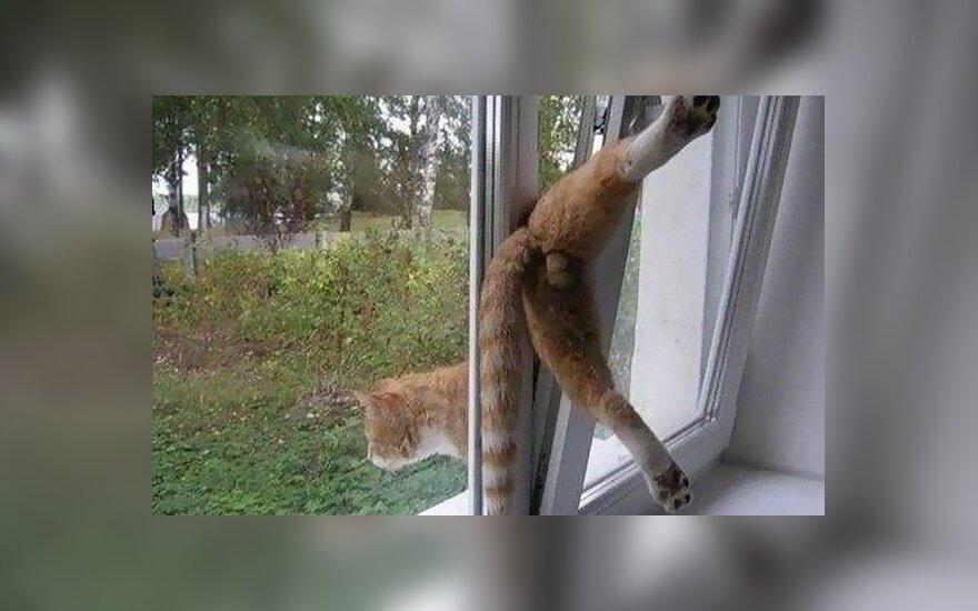 Kačių nesėkmės