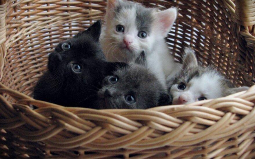 Gyvūnų globos organizacija kviečia kartu rūpintis kačiukais