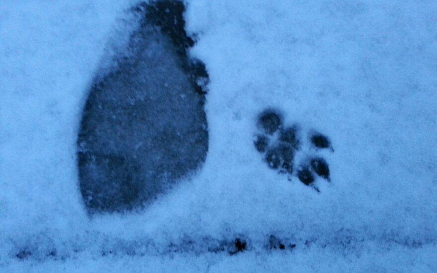 Kuo toliau, tuo šalčiau: per Velykas prognozuojamas sniegas