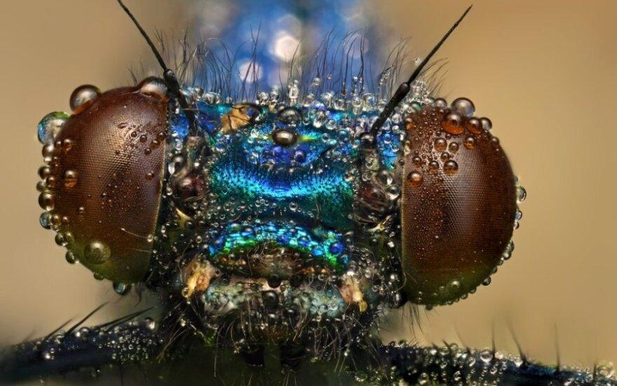 Sukurtos miniatiūrinės dirbtinės vabzdžių akys, kurios galėtų padėti išvengti avarijų