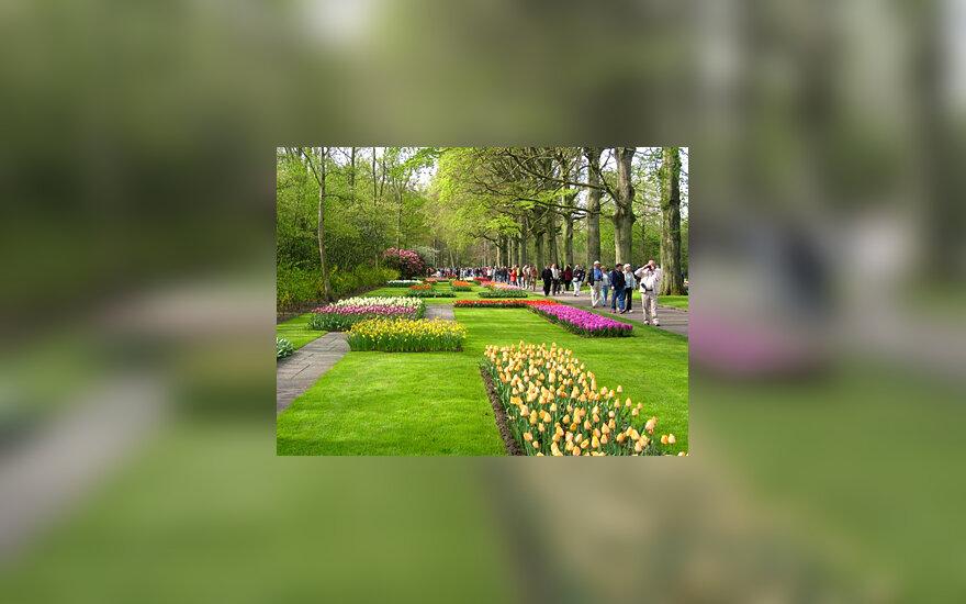 Keukenhofo dvaro gėlių parkas