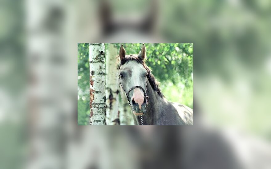 Žirgas