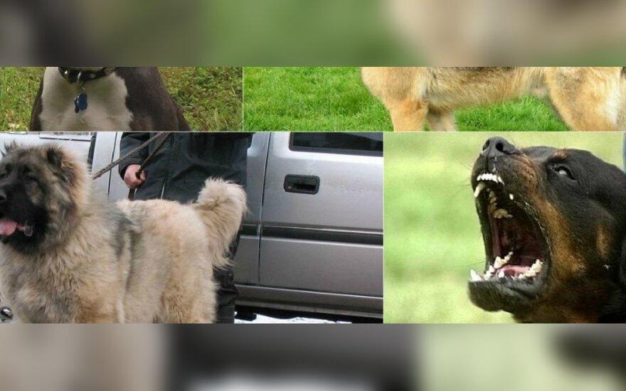 Šunys, kurie netinkamai auklėjami, gali tapti pavojingais