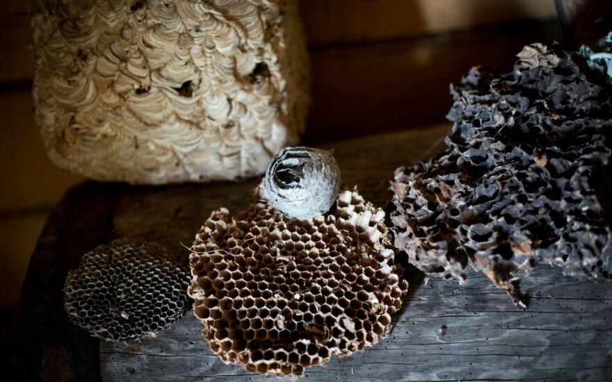 Bitininkai jau gali teikti paraiškas dėl kompensacijos tiriant medaus kokybę