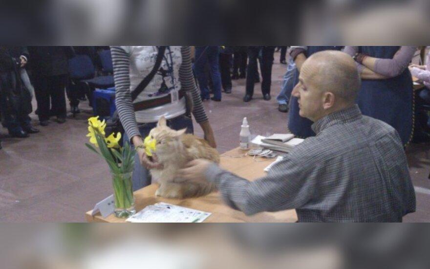 Klaipėdos kačių paroda sulaukė pasisekimo