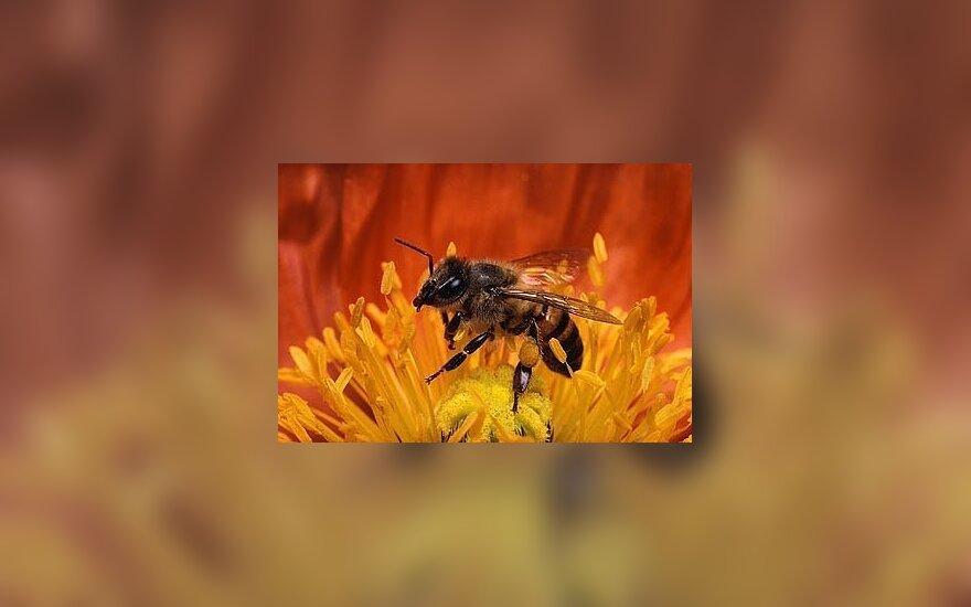 Prof. V.Sirvydis tėviškėje ilsisi ir augina bites