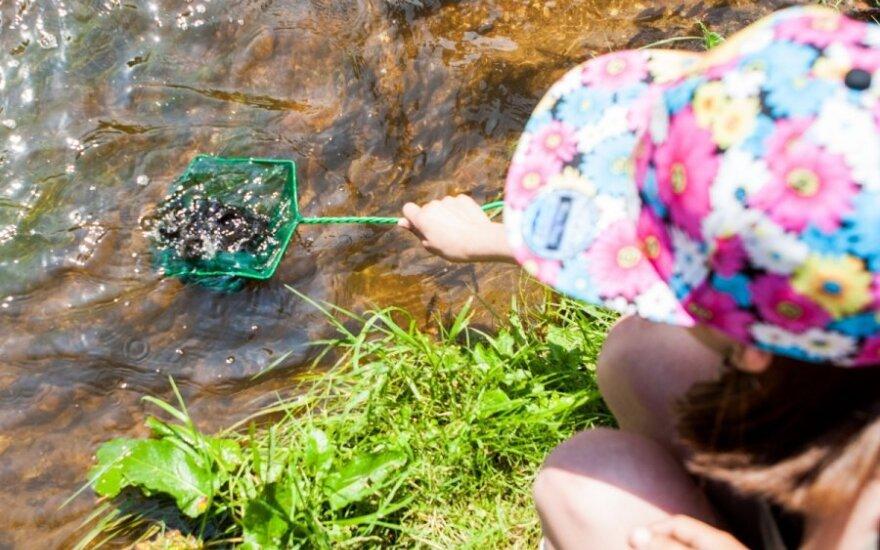 Lašišos ir šlakių jaunikliai išleisti į Vilnelės upę