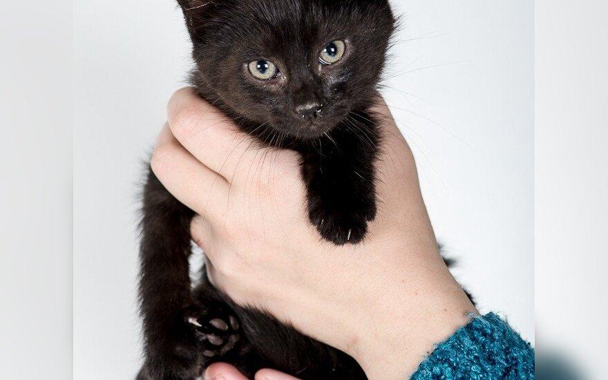 Juoda juoda, kur dairais: dovanojami maži nuostabūs kačiukai!