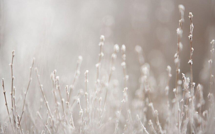Po žvarbaus šaltuko galima atsipūsti, oro temperatūra kils