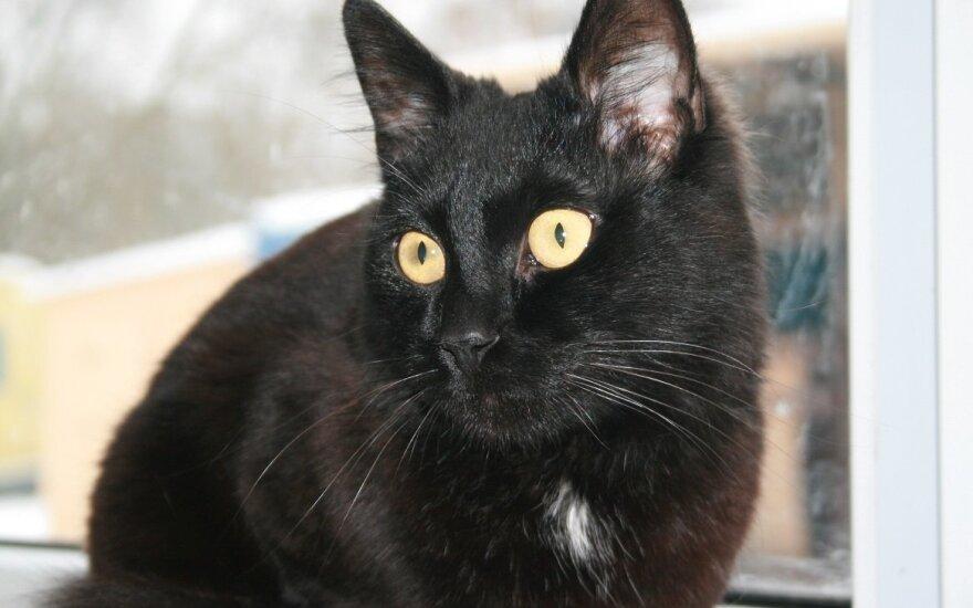 Kalbantis katinėlis Spykeris ieško namų