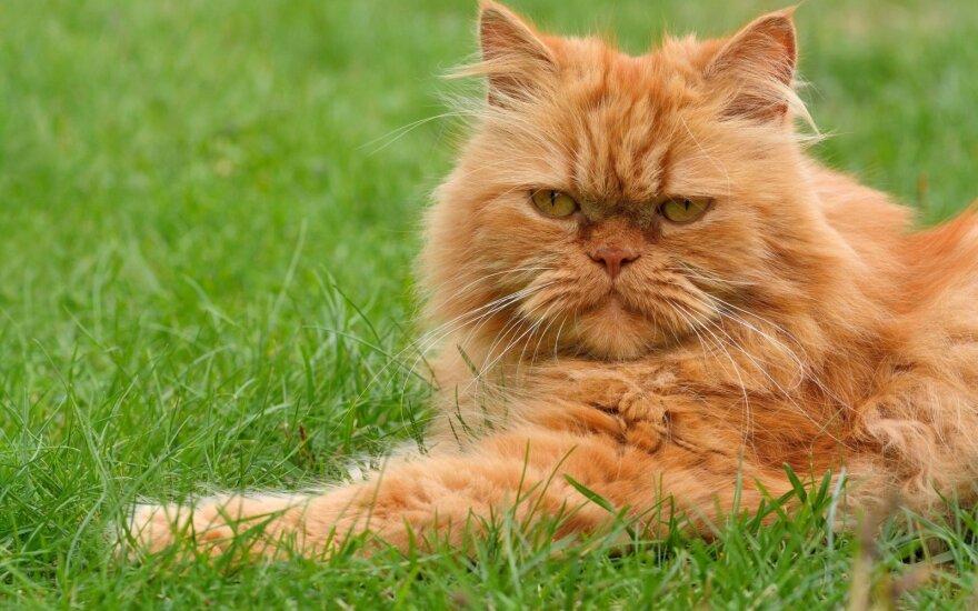 Mokslininkai išsiaiškino, kodėl katėms visai nerūpi jų šeimininkai