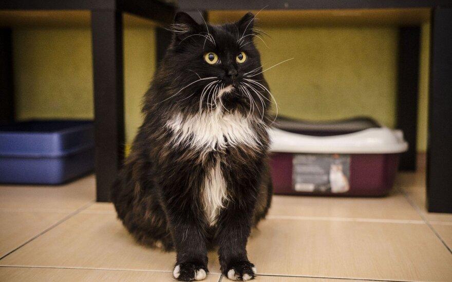 Mieliausias katinas, kuris atsidūrė gatvėje: Barbadosas ieško namų!