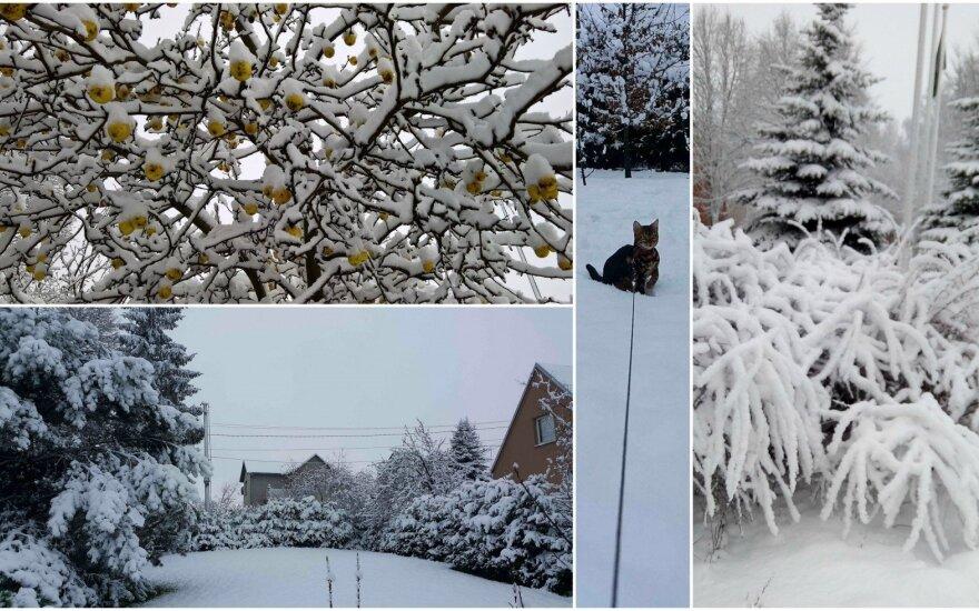 Šv. Kalėdų laukimas prasidėjo su Lietuvą nuklojusiu sniegu