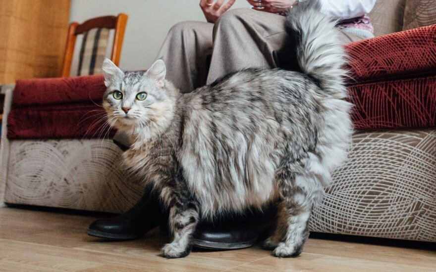 Kačių elgsenos specialistė pataria: ką daryti, jei katė šlapinasi ne vietoje
