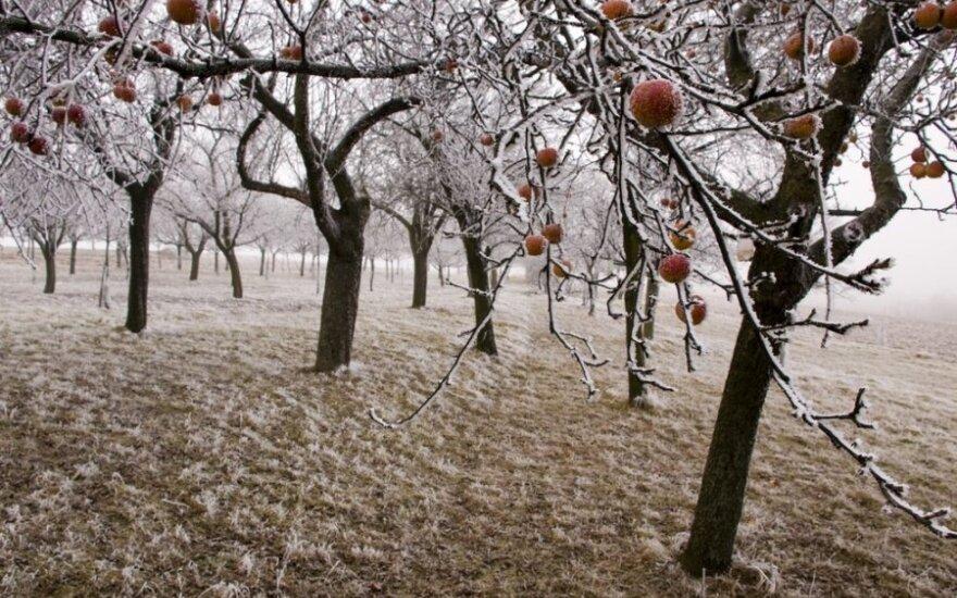 Žiema sode: laikas ruoštis pavasariui