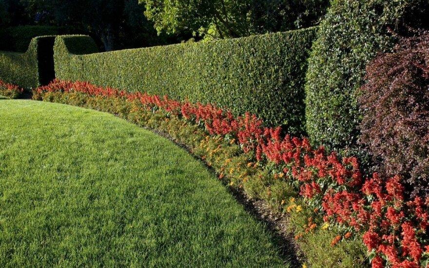 Gyvatvorė tinginiui: nekaprizingi augalai, kurių nereikia karpyti