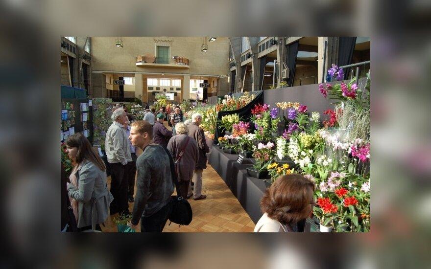 Orchidėjų paroda Londone